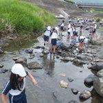 水生生物調査④
